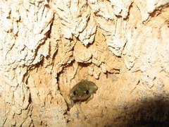 frog%20Myanmar_329.JPG